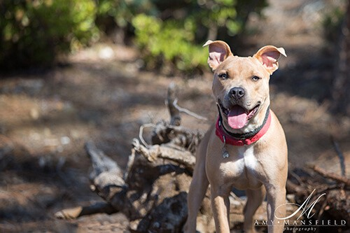 Picture of Kanoa - Dogs for Adoption