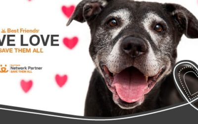 WDR & Best Friends Give Love Adoption Event Going on Now