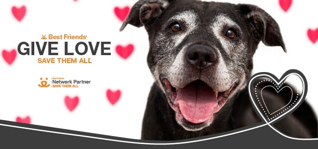 Best Friends Animal Society Give Love Adoption Event Going on Now