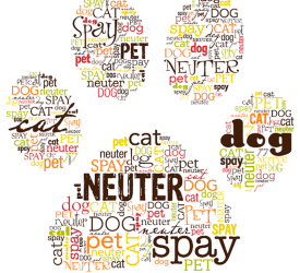 Guide to Responsible Pet Ownership